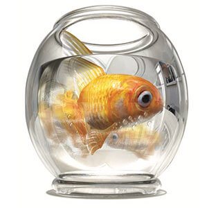 Link to PDF of poster titled Going in circles? We can help. Image of goldfish swimming in circles